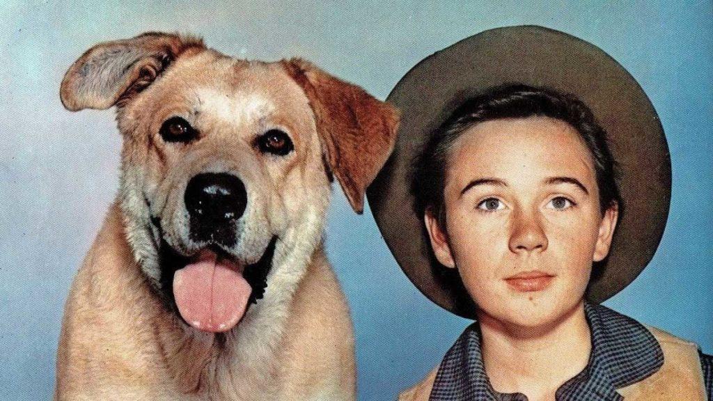 Tommy Kirk col cane Zanna gialla